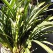 観葉植物の冬支度
