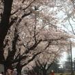 十和田 桜流鏑馬