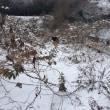 雪の中散歩