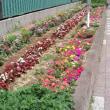 夏花壇になっていました