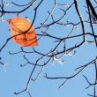 枯れ葉が一つ12.18