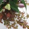第29回いしかわ四季の花協会展に行って来ました。NO.6(小原流)