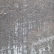 霧氷を見に