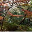 九品仏の紅葉