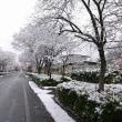 雪の長井市
