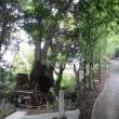早朝の来宮神社