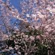 いびがわにも春の訪れ