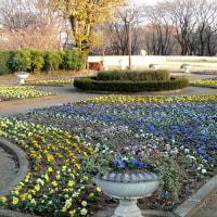 初冬の公園