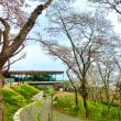 松島:西行戻しの松