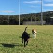 冬の朝に走る犬