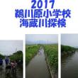 鵜川原小学校 海蔵川探検2017