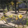 庭・小春日和の昼下がり