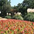 昭和記念公園 2