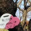 府中郷土の森博物館の梅