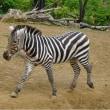 動物園 de ふれあい