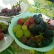 オアシスと果樹園。