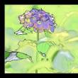 PhotoShopで紫陽花