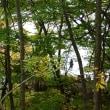 美しい十和田湖の紅葉
