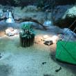 京都市動物動物のインドホシガメ達