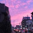 さくら色の夕焼け(ちょっと濃いめ)
