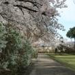 沼田公園散策  4月7日