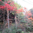 紅葉の撮影&高山トレーニング