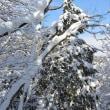 まち歩き滋賀0700  雪山ハイキング