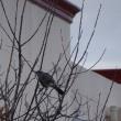 小鳥の声がこだまする冬のような日でした