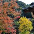 紅葉の便り 11月26日(月)晴れのち曇り