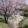 桜に浮かぶ、蒜山三山は最高でした!