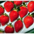 初冬の旬の味覚到来(^^♪福岡八女の大粒の甘いイチゴの王様 あかい、まるい、おおきい、うまい「あまおう」