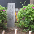 亀戸天神社の藤と根津神社のツツジ(続き)