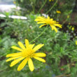 ゆっくりと咲く花