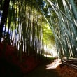 『鷹取山・里のみち』 竹の小径