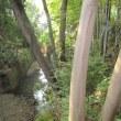 緑が鬱蒼と繁る等々力渓谷