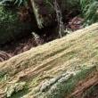 朽木の上のコケ