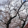 桜咲く 花の季節