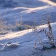雪が降らないで霜ばかり