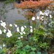 絵手紙と庭の紅葉