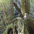今週見られた屋久島白谷雲水峡の景色