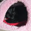 黒猫ジジィ 11日(水)の僕