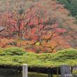 善峯寺の紅葉(5)