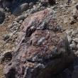 フォッサマグナから3000メートル乗鞍への旅(5)