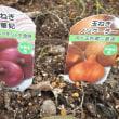 秋の花壇菜園