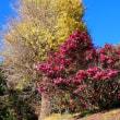 『寺社の花』 御岳神社