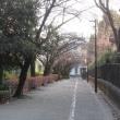 散歩;渋谷 ⇒ 駒場公園(旧前田家本邸)⇒ 池尻大橋