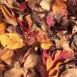 秋来たる!