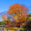 東京へ紅葉狩り