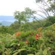 花の百名山