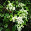 掛川の山の花